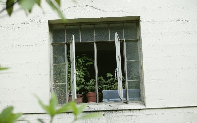 White dorm building and window with potted plants on the window's display.