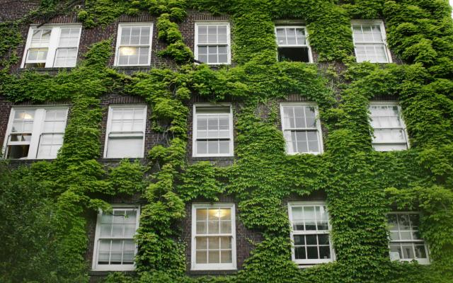 Three stories of a building are covered in climbing vines as they surround the multiple white windows.