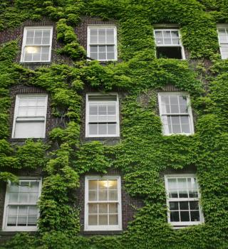 windows outside dorm covered in plants