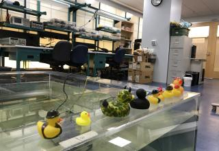 NEAR Lab water tank and rubber ducks