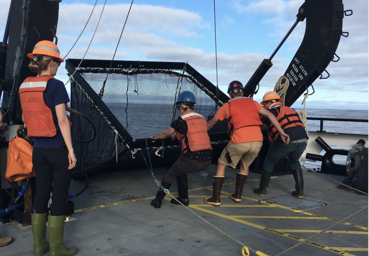 Dr. Lindgren and students conducting research at sea