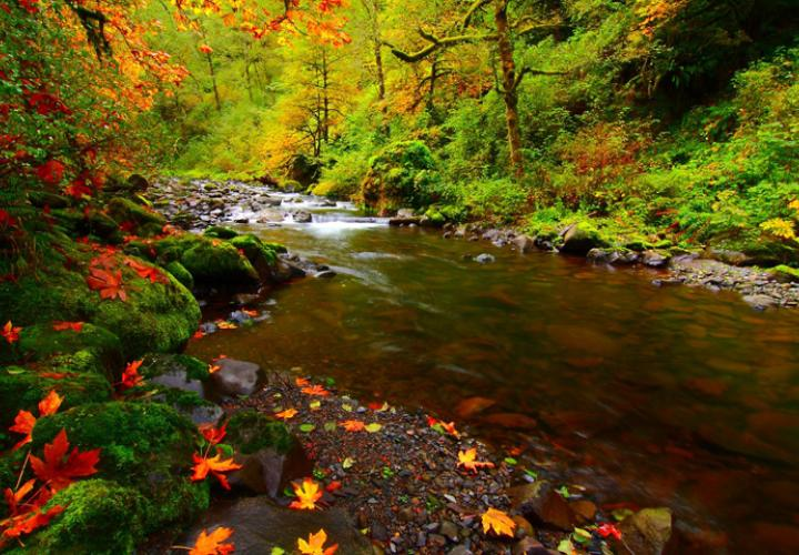 Canon River Oregon creek in autumn