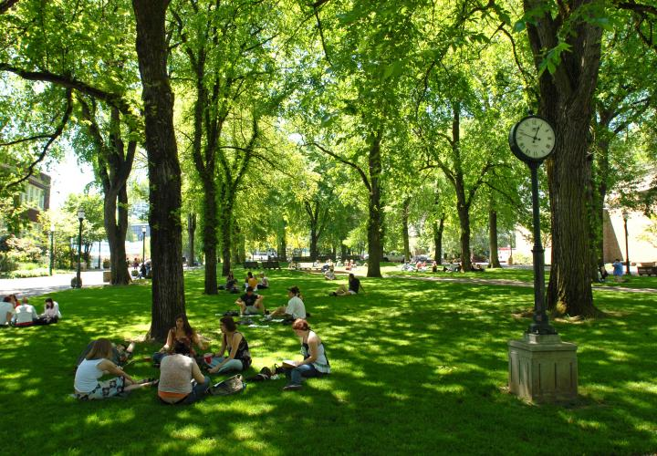 Students studying in the park blocks