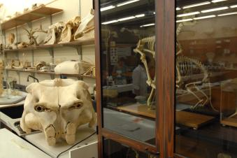 Museum with archaeological bone specimens