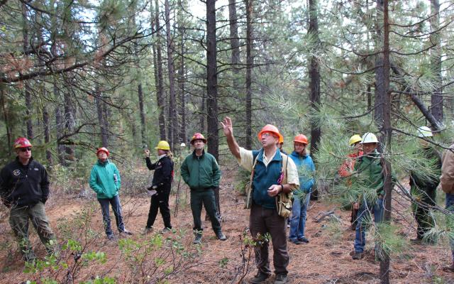 Group of people in hardhats in a forest, with man in front point upwards