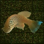 Decorative image of fish.