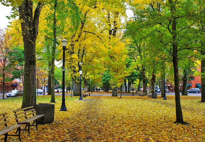 Autumn park with yellow leaves covering the ground