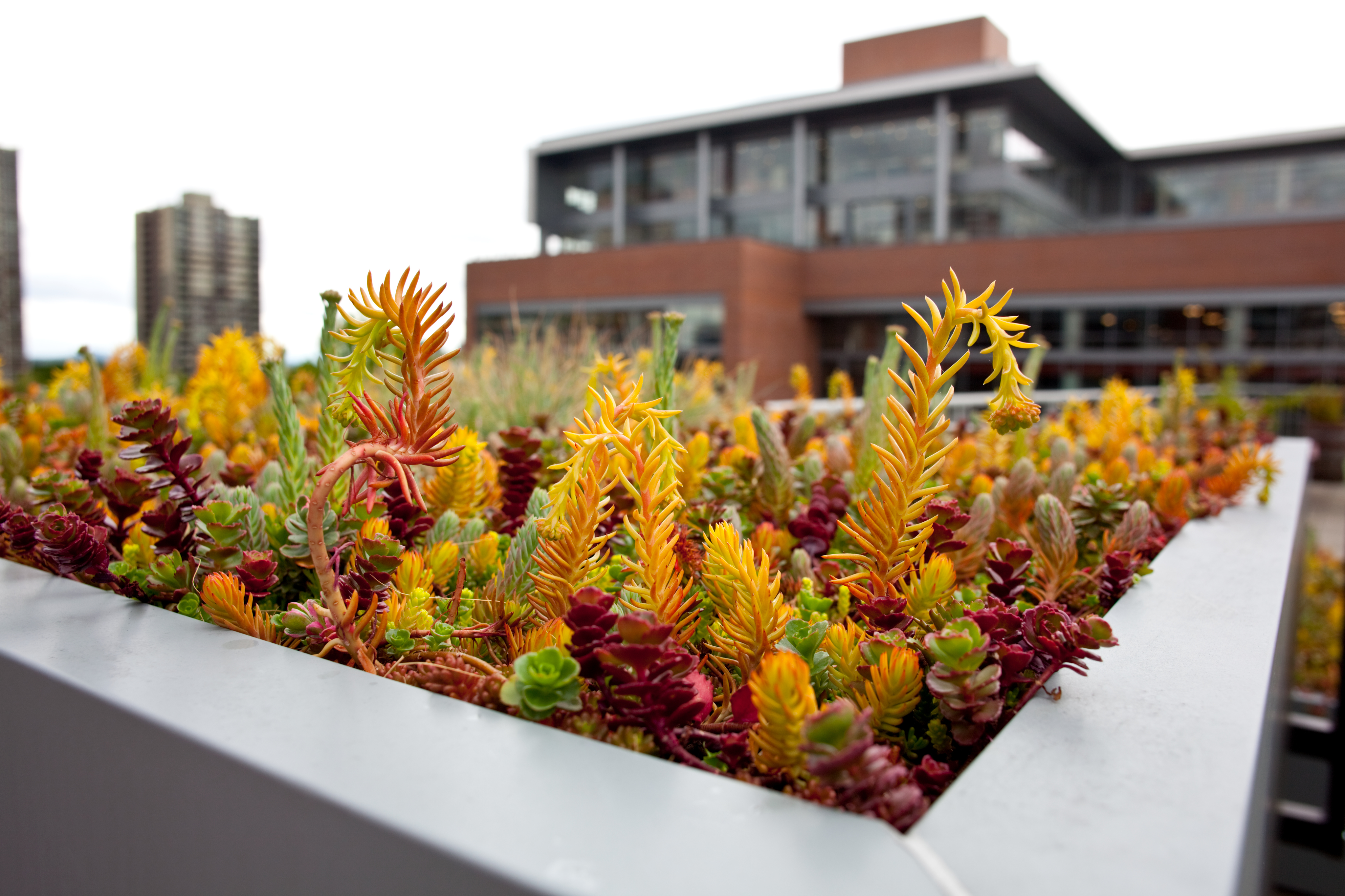 Succulents in Planter on ASRC Rooftop