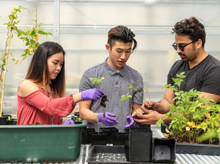 Students working with plants in a green house