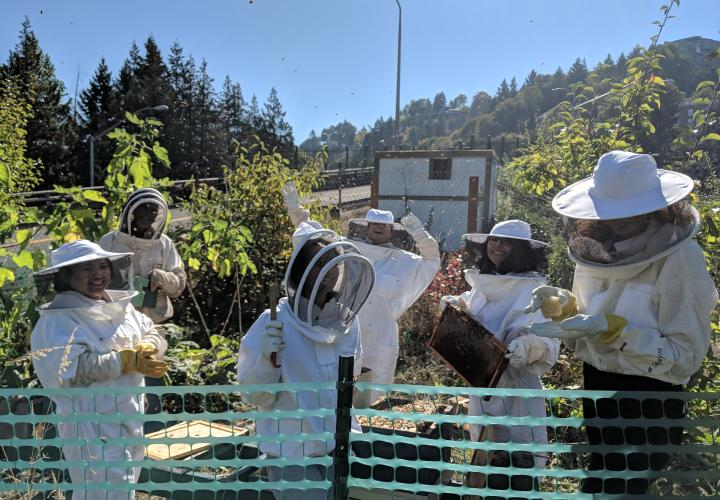 Students work on campus apiary, supporting bees.