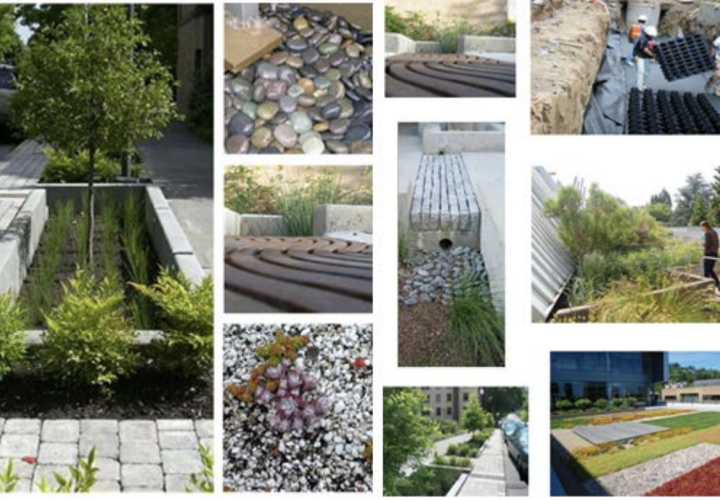 stormwater management solutions such as rain gardens
