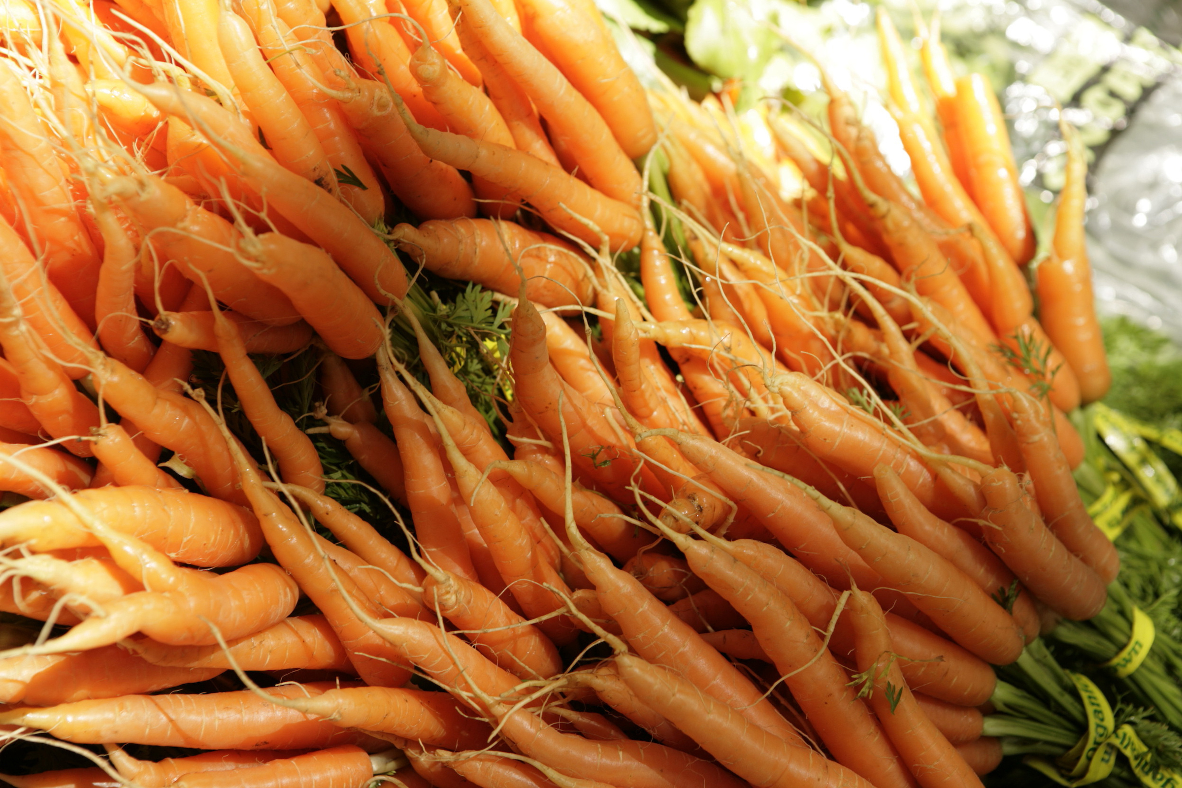 bunches of carrots to be sold at a farmer's market