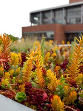 Rooftop planter on the Urban Center roof terrace
