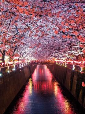 View of a river and cherry trees in Japan