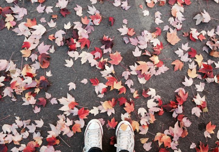 shoes standing on autumn leaves